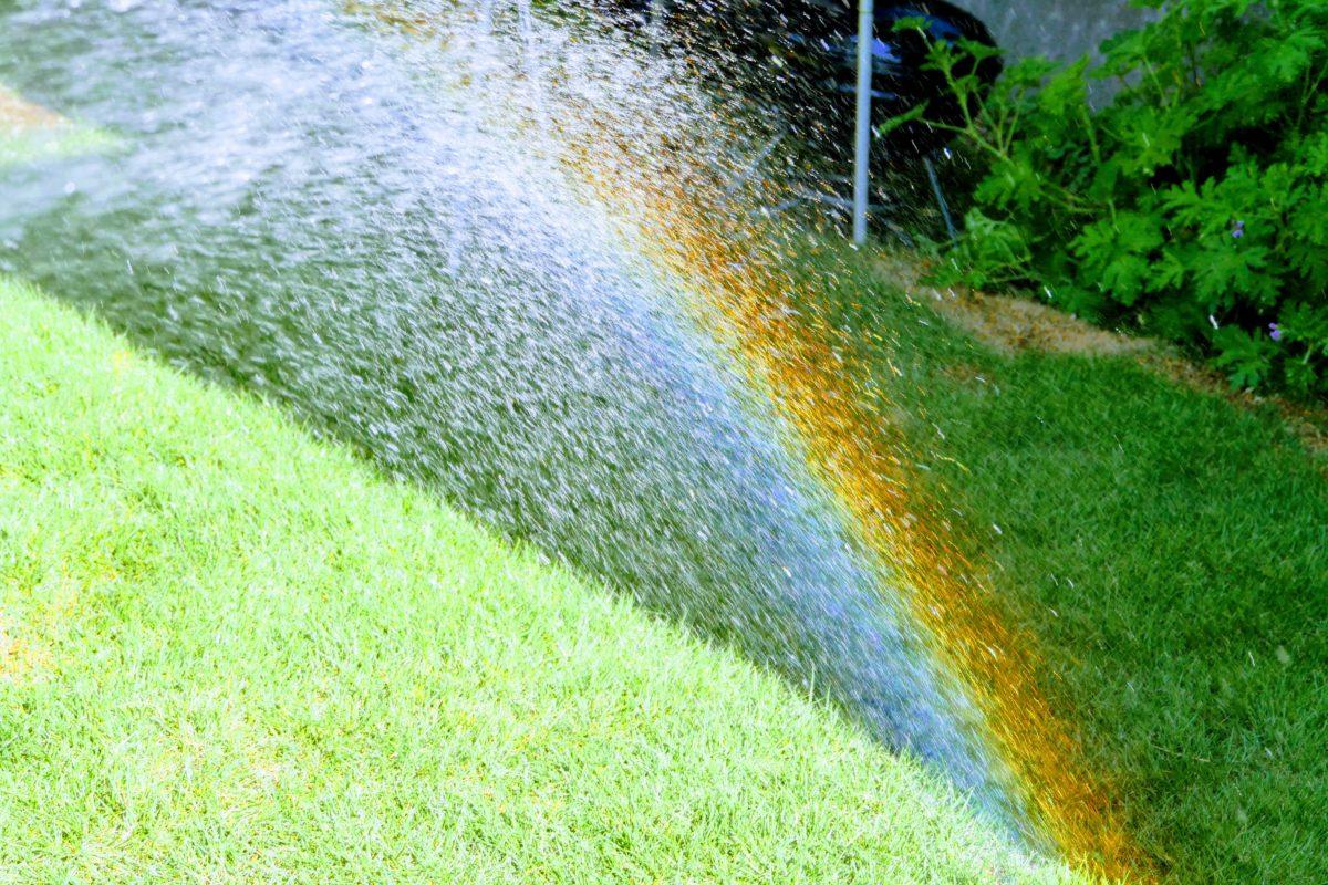 庭で虹を愉しんだ